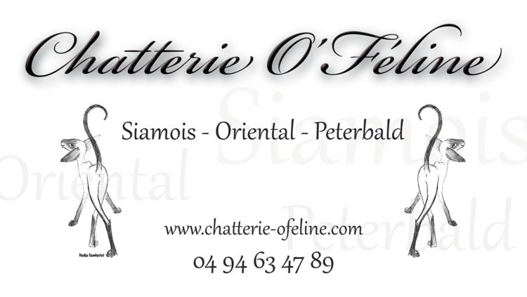 Bâche Chatterie O'Féline